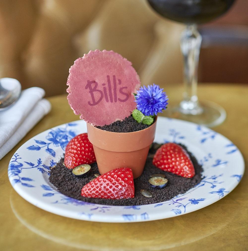 Bill's plant pot