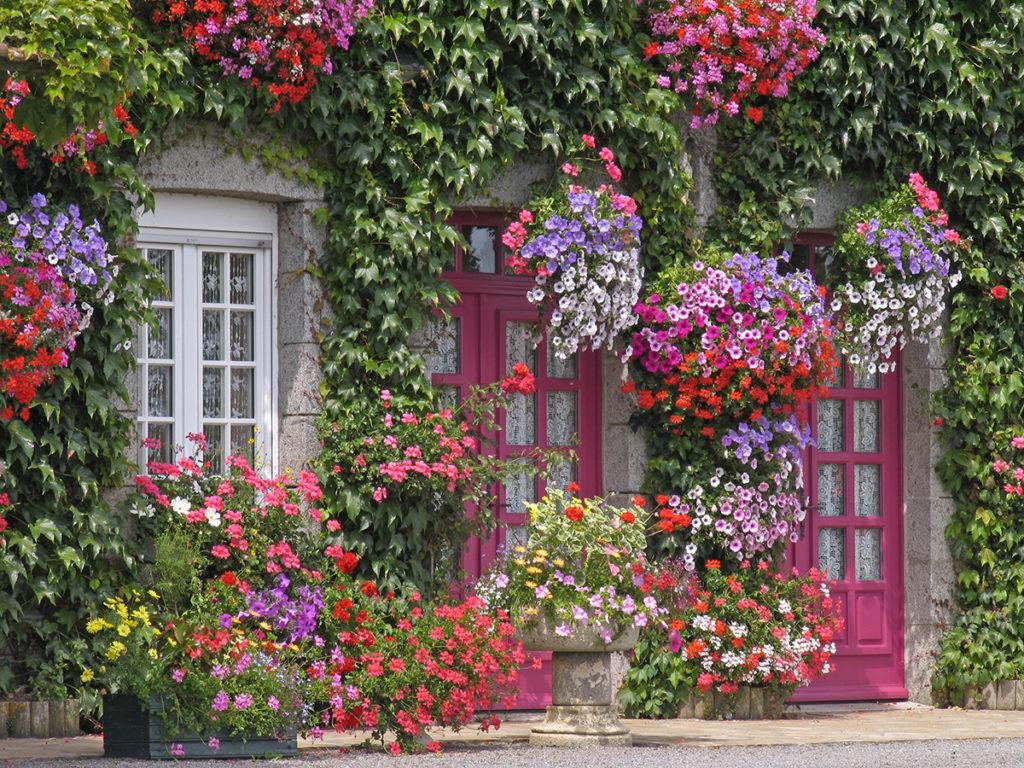 Top 10 Outdoor plants