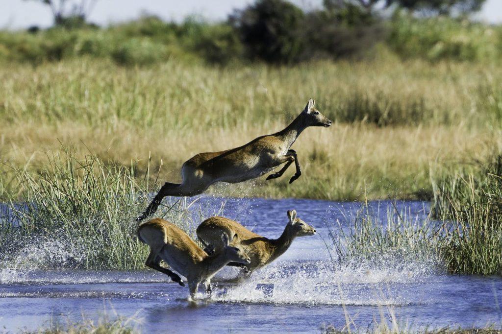 Fine Dining At Wilderness Safaris