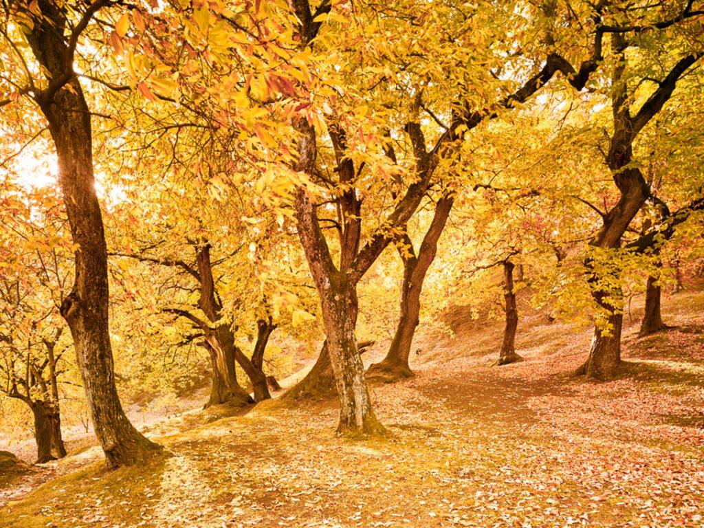 Autumn Walks in Italy