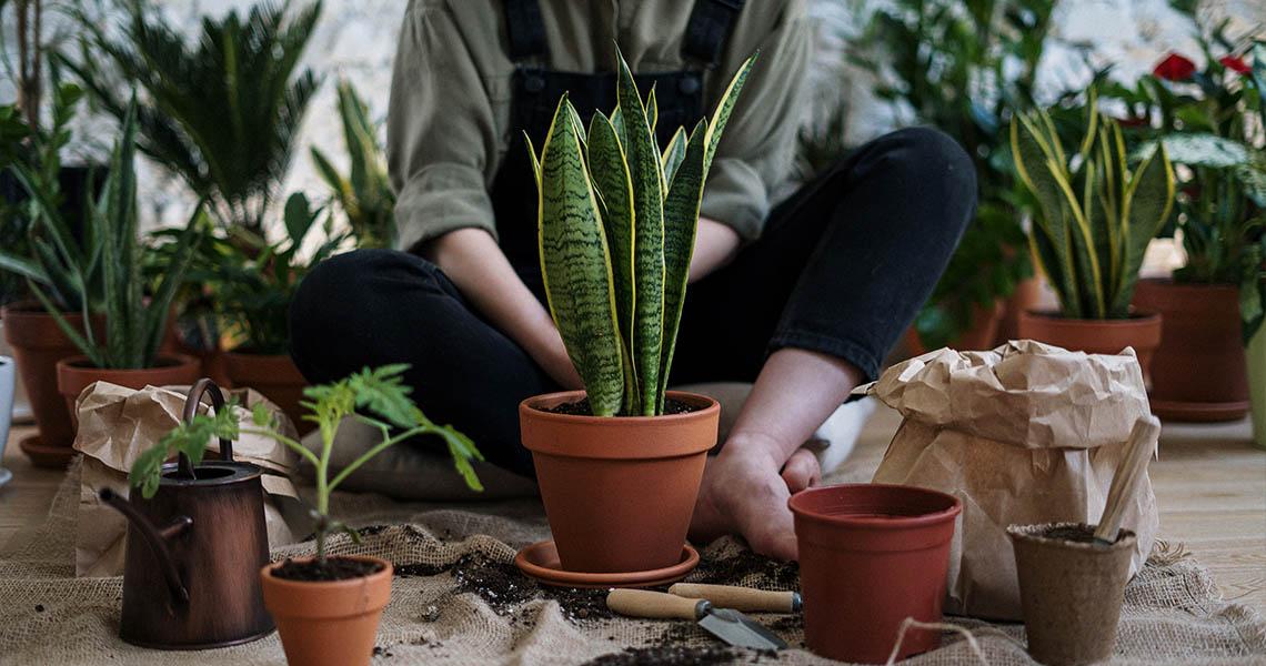 How to improve your garden